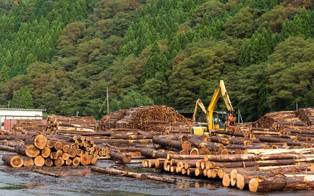Utilizarea lemnului din pădurile gestionate durabil trebuie să fie o prioritate pentru PNRR