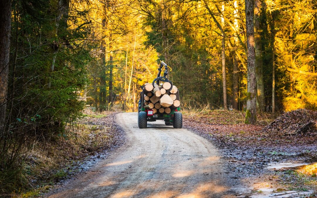 Combaterea fenomenului tăierilor ilegale are nevoie de transparență și luciditate